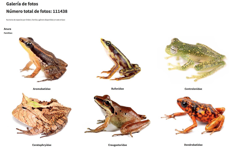 Contenidos anfibios Ecuador